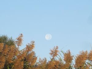 Moon over Black Cat Lake