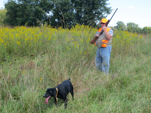 Bird Dog Hunting