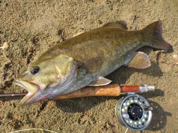 Smallmouth bass and reel
