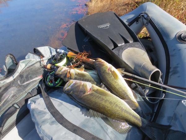 Fish, float tube and fins