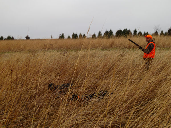 Pheasant hunting in Attica, Indiana