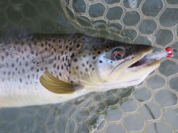Brook trout caught near Brookville