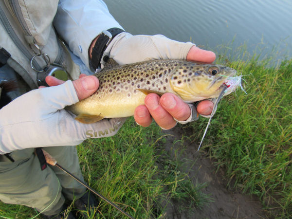 Truot caught in the Driftless area