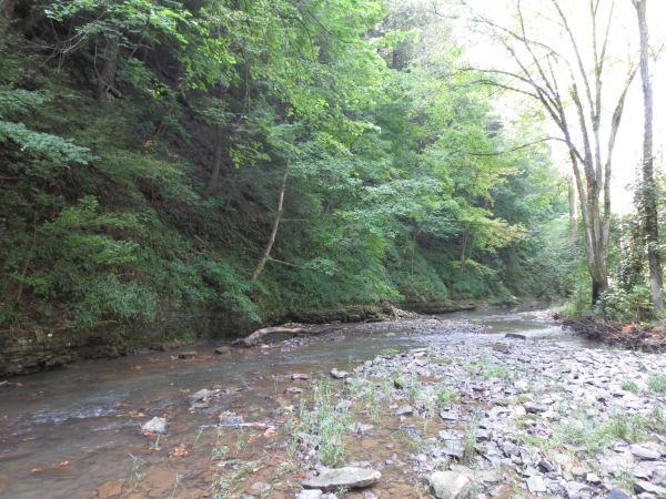 small (micro) creek