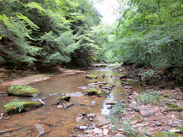 Fly fishing small creeks for summer smallmouth for Small creek fishing